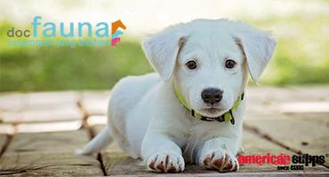 docfauna – Hochwertige Nahrungsergänzungsmittel für Tiere
