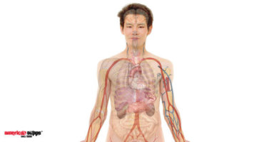 Luteinisierendes Hormon